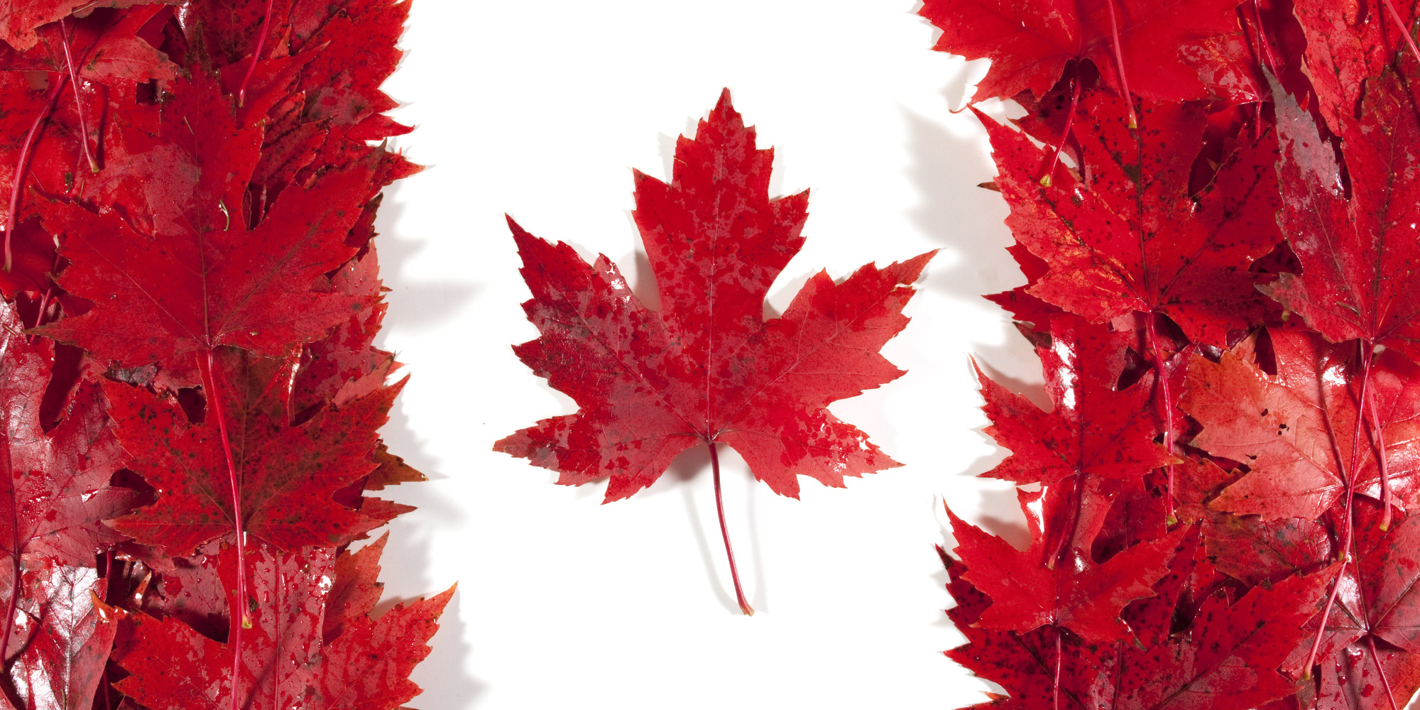 Canada, fertile ground for cogeneration