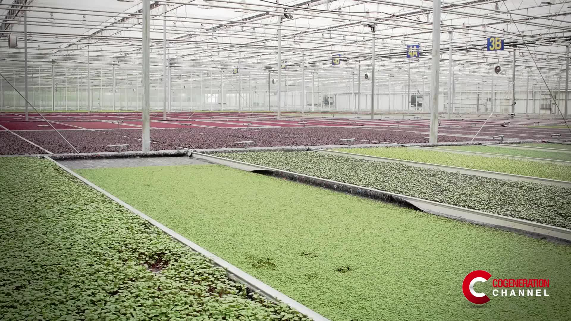 UK: 1.5 MW CHP plant sustainably heats greenhouse for edible flowers
